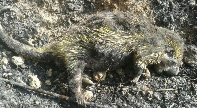 Imagens da destruição da Fauna e Flora