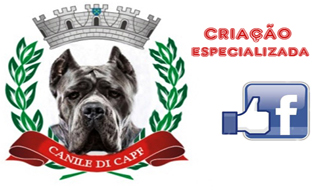 Canile de CAPF - Cane Corso