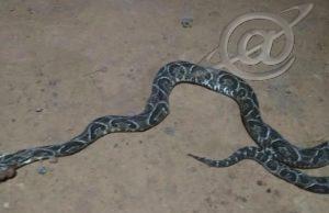 Cobra Urutu Cruzeiro