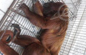 Animal assassinado