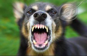 Cão de rua, é preciso estar atento